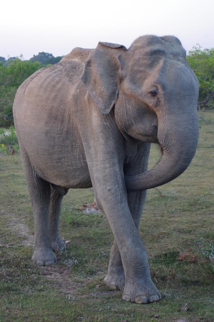 Stunning Wild Elephant