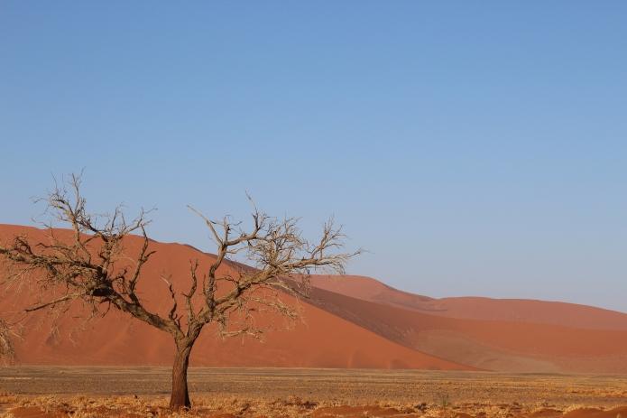 Base of Dune 45