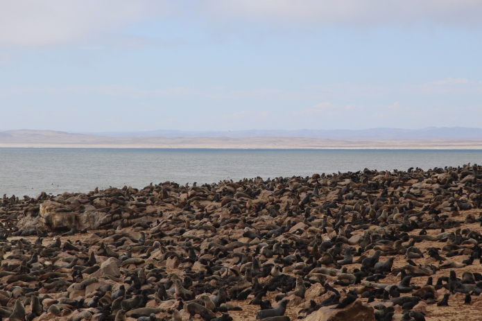 Hundredds of thousands of seals