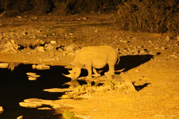 One of the 4 rhino they visited us that night