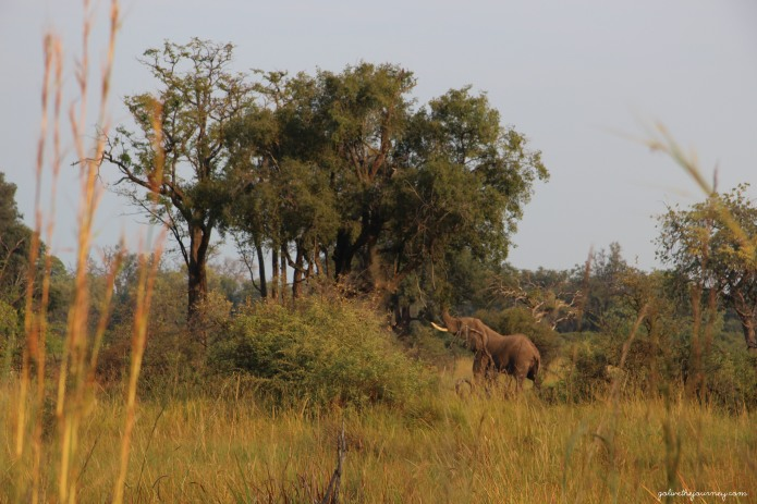 Elephant at camp